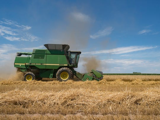 A wheat combine moves across a field on City of Thornton