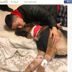 German shepherd shot three times saving 16-year-old from armed robbers