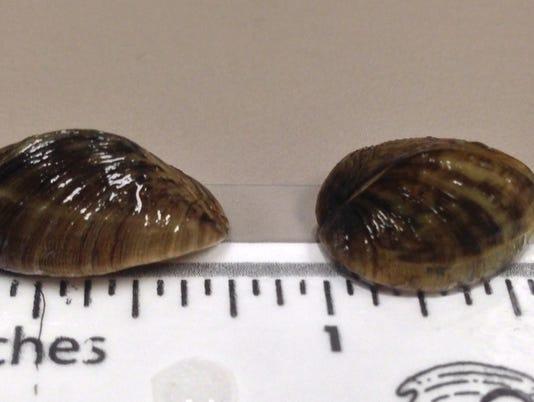 636452334107092890-knaus-lake-zebra-mussels-1017.jpg