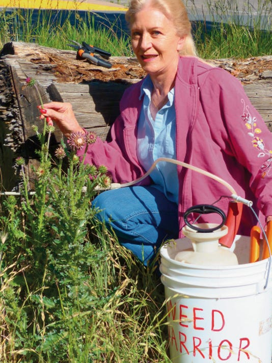 Pat Greener is looking for volunteers to police land for musk thistle and for a new leader to take over Weed Warriors. She holds a bud head close to blooming on a second-year plant.