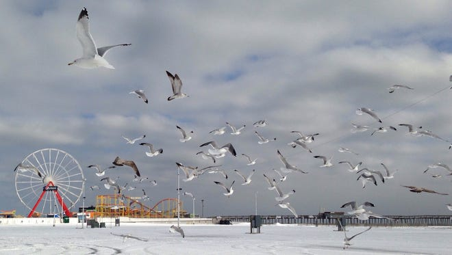 Sea gulls fly in the Inlet in Ocean City.