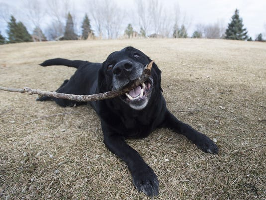 The Top 10 Dog Breeds In Larimer Couty Are
