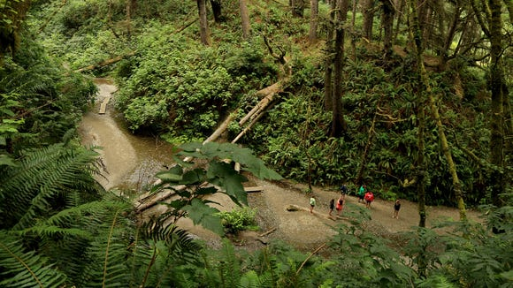 Hikers explore Fern Canyon in California's Prairie Creek Redwoods State Park.