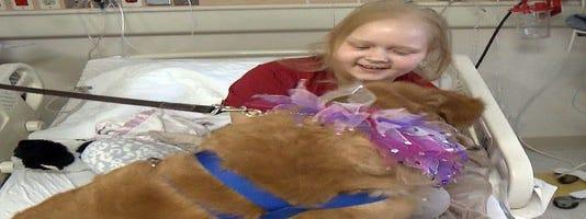 635578670057886911 dogs healing 01