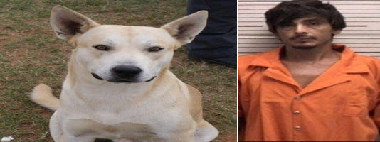 Man's own dog helps police bust him