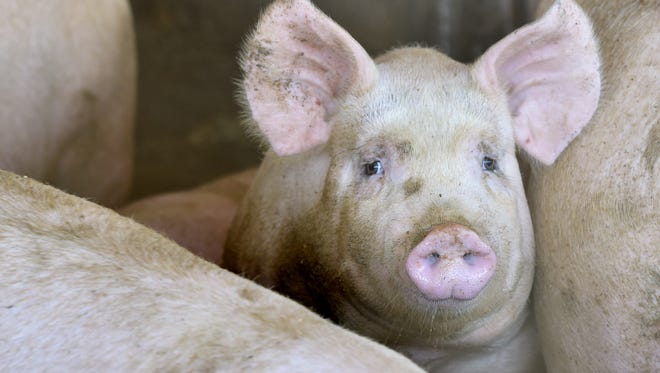 Family-owned Prestage Farms of North Carolina had proposed a $240 million pork processing plant in Mason City, but the council rejected it earlier this month in a split 3-3 vote.