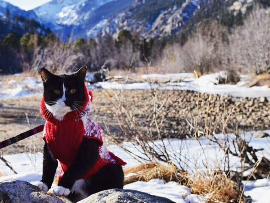 The Hiking Cat of Colorado