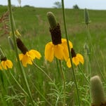 Wildflowers instrumental to creating a diverse habitat