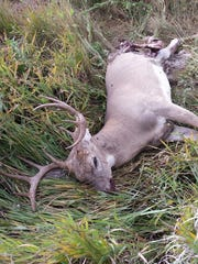 FWP is looking for information on a dead whitetail