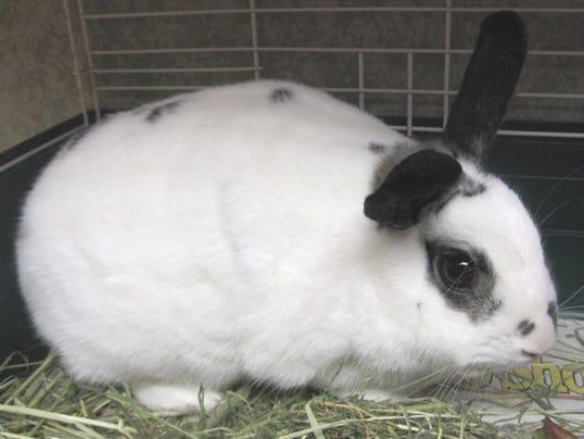 Bunny 23173743.JPG