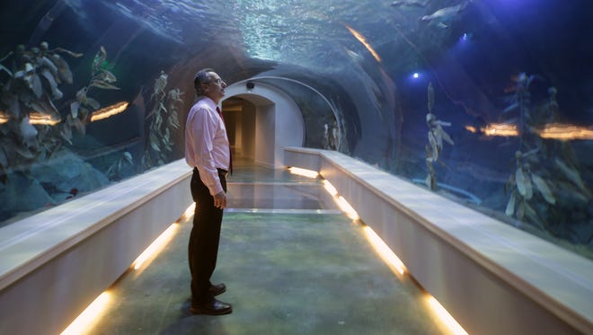 Ron Kagan, executive director and CEO of the Detroit Zoological Society, pauses to check out the penguins in their new home during the media preview on April 13, 2016.