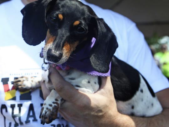 German Fest lets the dogs out with the annual  Dachshund
