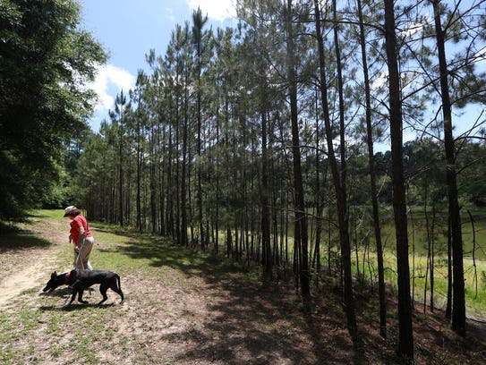 A woman walks her dog along a path located near the