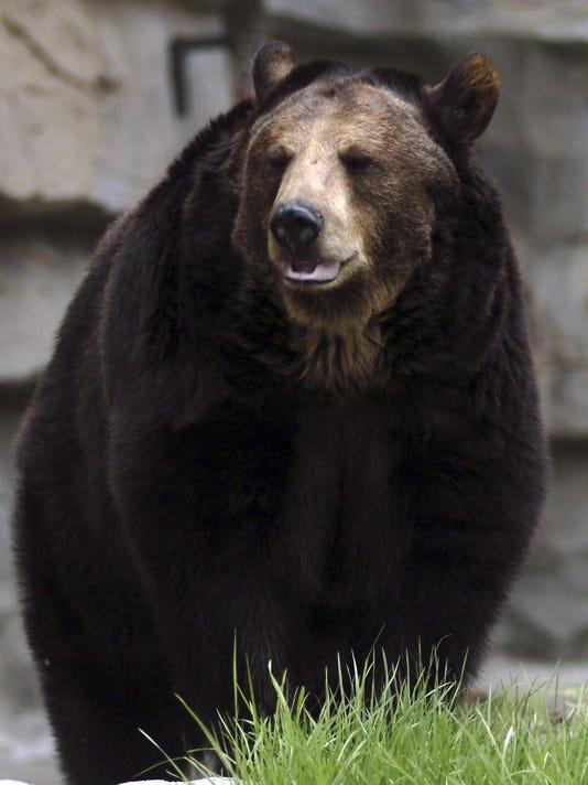 liv.bear