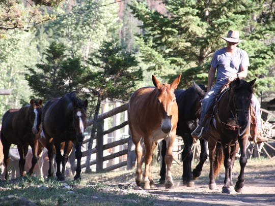 K Bar L Ranch staff moves horses.