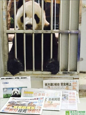 Tuan Tuan the panda posed with newspapers to prove it was still alive after Chinese media reported rumors of his death.