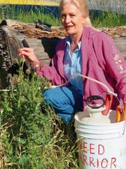 Greener was busy in 2014 cutting the heads of thistles and bagging them.
