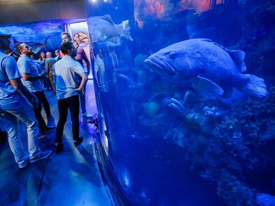 "The members of Dude Perfect were on hand to announce that Wonders of Wildlife was named was named the nations ""Best Aquarium"" by USA TODAY's 10Best.com travel advice website on Friday, May 4, 2018."