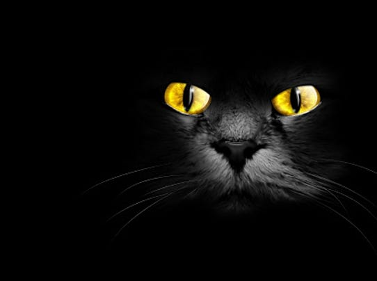 Black Cat Omen