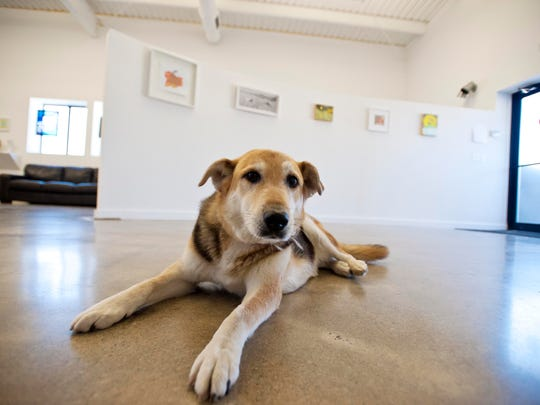 Nollie greets vistors at the South Gallery on Sears Lane in Burlington on Aug. 8.