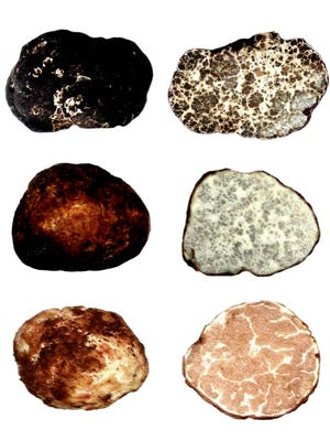 Plain on the inside, truffles have amazingly interesting interiors, according to Jim Trappe.