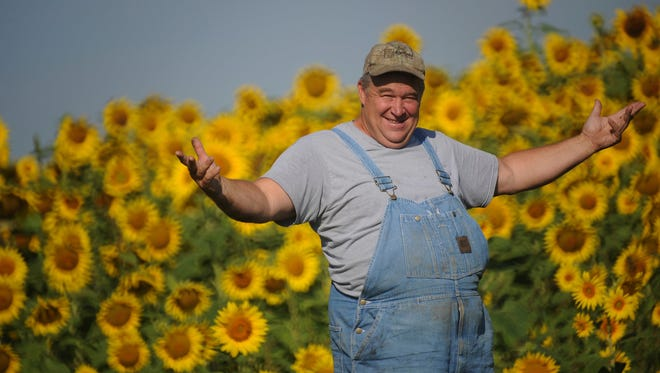 In this Aug. 9, 2017 photo Russ Grollemond, farm manager at Barrington Hills Farm stands  in one of two sunflower fields located in Barrington Hills, Ill.In addition to providing a vibrant visual along the village's country lanes, these fifty acres of sun-worshipping plants play a practical role in the conversion of the nearly 700-acre the farm to transfer it to purely organic. Among the criteria for organic certification is the soil must be found to be chemical-free, and sunflowers are among the species that can help expedite that process, experts say.