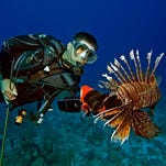 Time running short for lionfish incentives