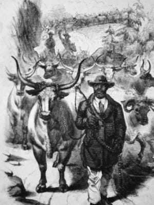 A drawing of an African-American drover just outside of Staunton in the 1850s.