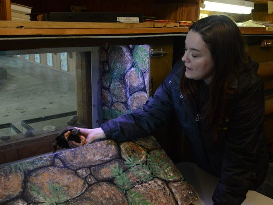 Heather Yount checks on the status of the turtles while