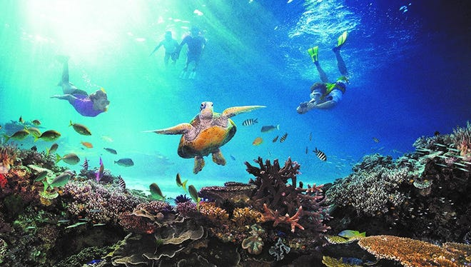 Explore marine life at the Great Barrier Reef.