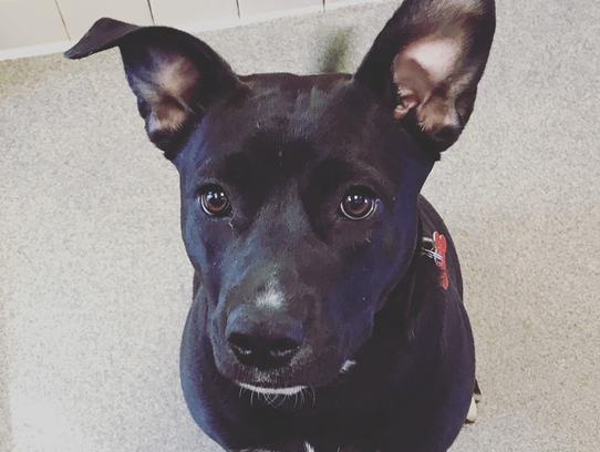 Leia's lovely ears perk up when she smells french fries.
