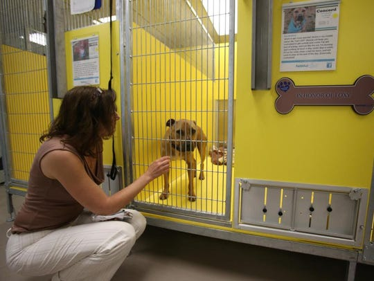 Executive Director Jane Pierantozzi visits a dog at Faithful Friends Animal Society's dog kennels.