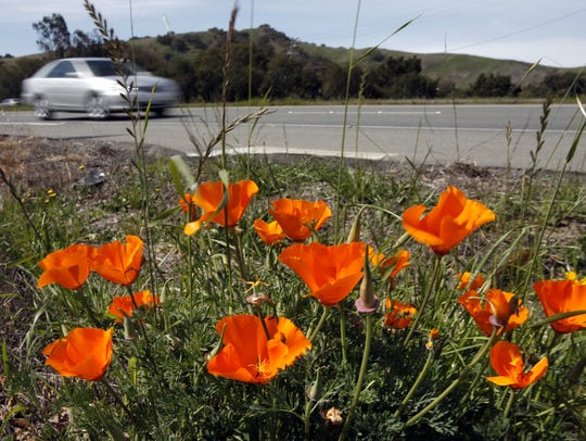 Wildflowers sprouting up along Highway 68 near River