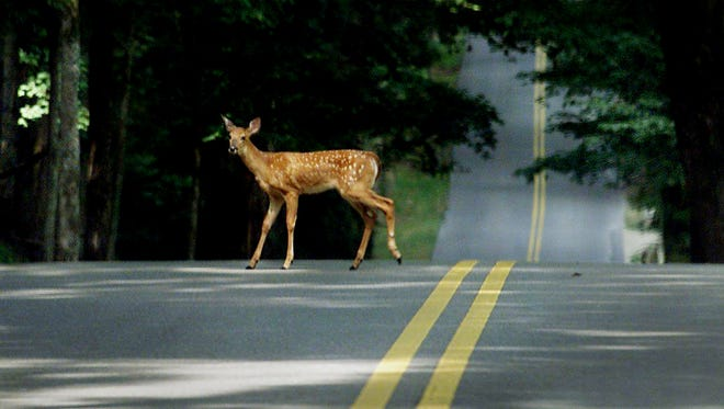 Watch out for deer darting out in the road this season.