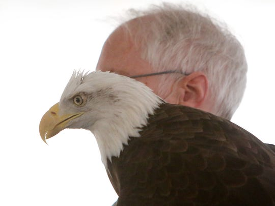 Bill Streeter shows the crowd a bald eagle during a program called Close Encounters with Wintering Eagles and Owls during Teatown's Hudson River EagleFest at Croton Point Park in Croton Feb. 6, 2016.