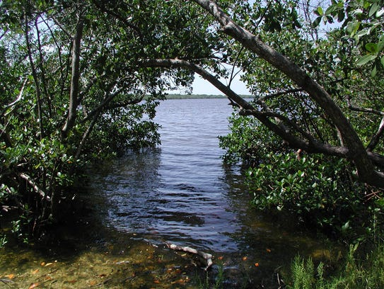 Mangrove tunnel at Rookery Bay National Estuarine Research