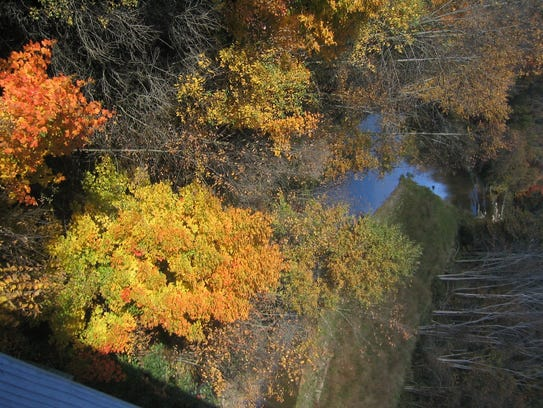 Autumn leaves in the trees on the Wadhams-to-Avoca