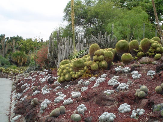The lava flow at Huntington's world-famous Desert Garden