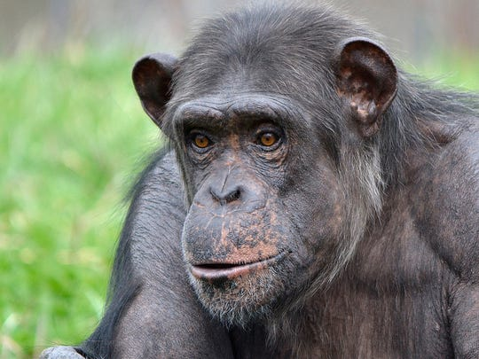 Akati suddenly collapsed and died Tuesday, according to zoo officials.