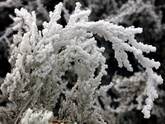 Ice covered bushes add to nature's decorations.