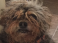 Scamp, whose hair naturally grows dreadlocks, works as a pet therapist with Alzheimer's patients.
