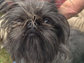 Monkey is a 3-year-old Chinese crested and Brussels griffon mix. This is Monkey's third year competing in the World's Ugliest Dog competition.