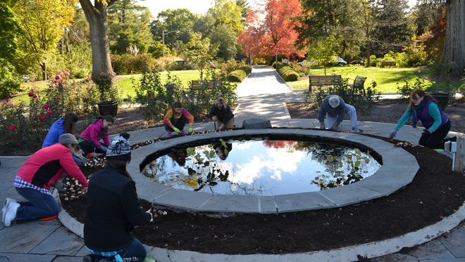 "Volunteers from ""Living with RSDS"" work with Horticulture Staff at Colonial Park Gardens to plant 1,000 tulip bulbs around the pond at Rudulf van der Goot Rose Garden"