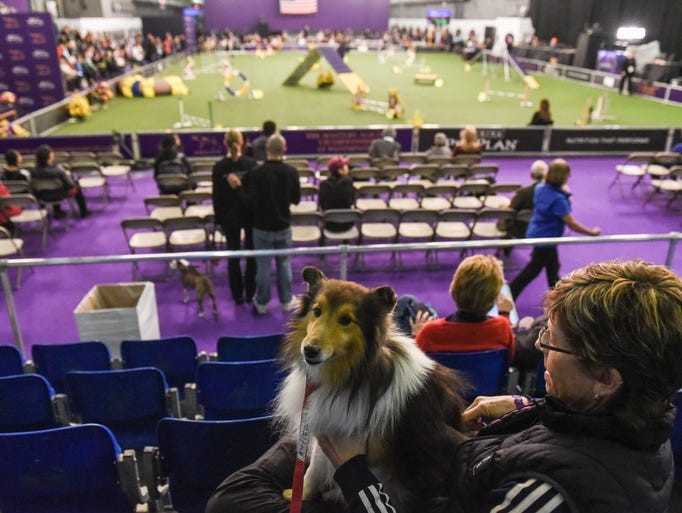 A dog rests in the stands as others compete in the