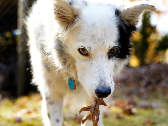 GAN TALKING DOG 112413 3