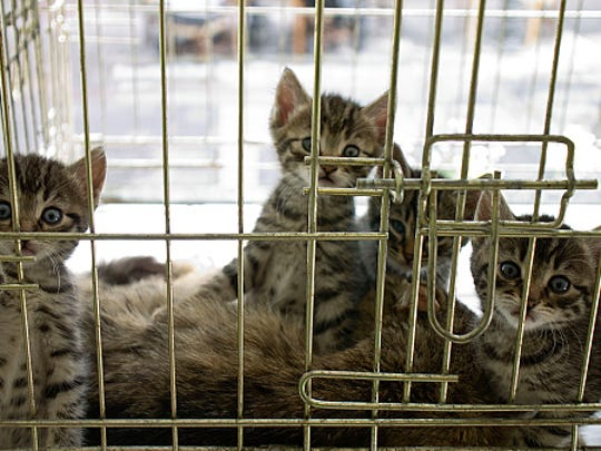 Two kittens, not pictured, were abandoned inside onion bags at a New Jersey supermarket on Tuesday morning, a local animal shelter said.