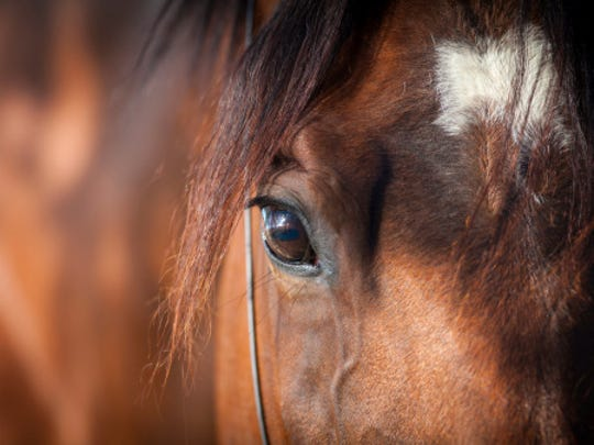 If you love horses, this weekend is for you.