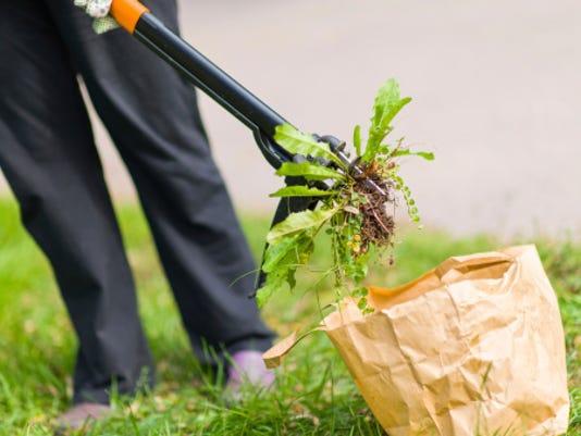 635914760466258496-Weeds.jpg