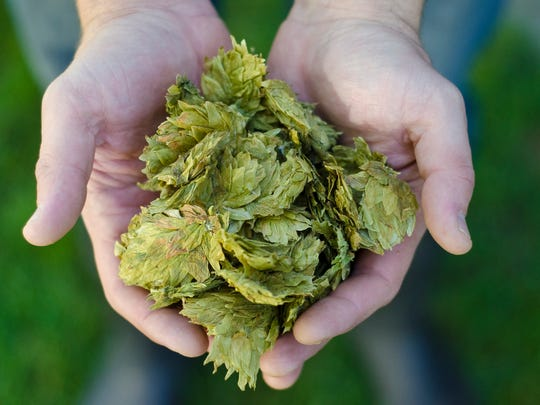 A discussion of what goes into brewing beer can bring up ethical and environmental questions.