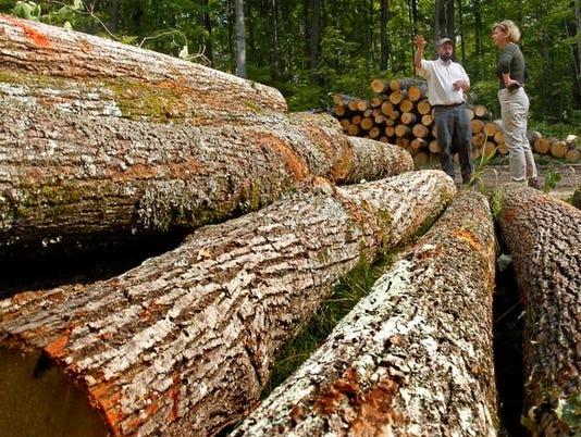 Baldwin-Timber